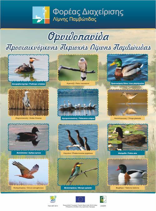 Αφίσα Ορνιθοπανίδα